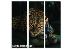 Леопард на черном (модульная)