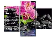 Орхидеи. Спа (Модульная)