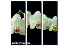 Орхидея. Белая на черном (модульная)
