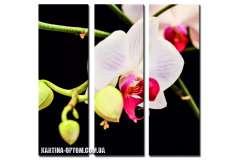Орхидея белая(модульная)
