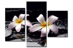 Орхидея на камнях (Модульная)