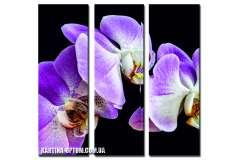 Орхидея фиолетовая (модульная)