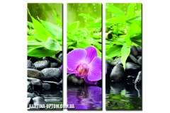 Орхидеи.Спа (модульная)
