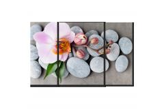 Орхидея на камнях (Модульная 110*70)